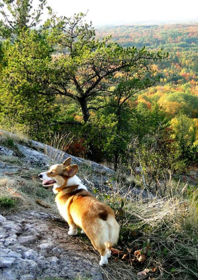 adventure-corgi-mountain