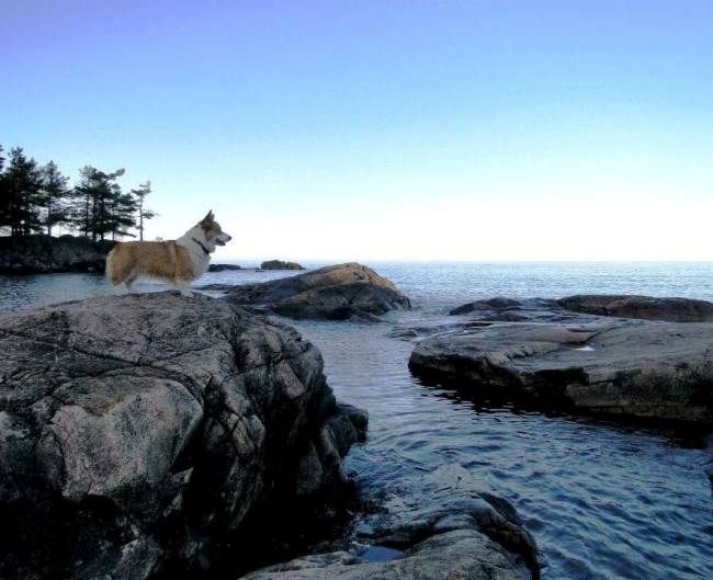 adventure-corgi-ocean-sunset