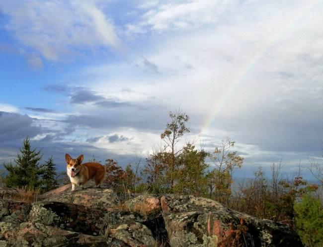 adventure-corgi-overlook