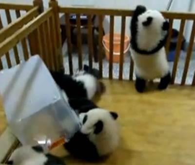 baby-panda-escape