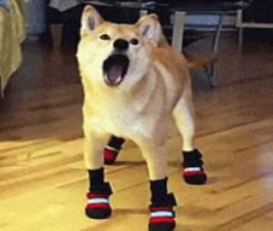 silly-dog-walks