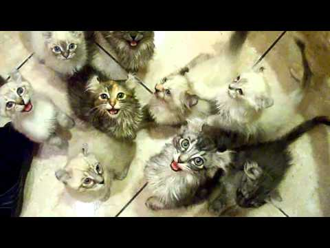 Freakiest Cats Ever