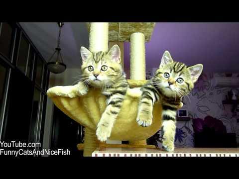 Kittens Watch Tennis