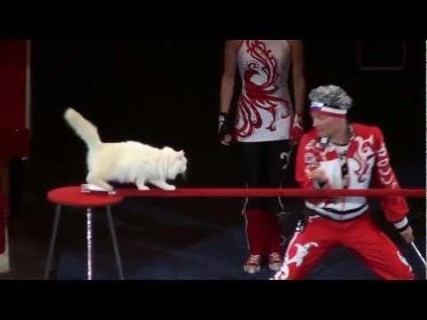 Russian Circus Cats