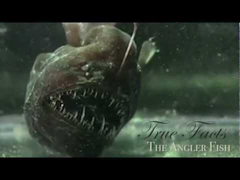 Angler Fish Facts