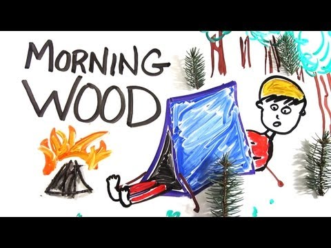 The Science Of Morning Wood
