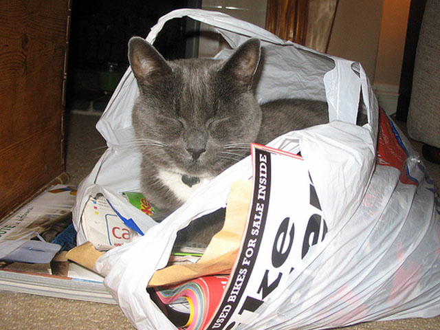 Cat Sleeps In Grocery Bag