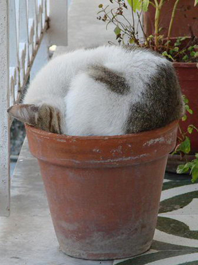cats-sleeping-weird-places-plant-pot