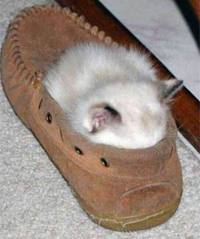 cats-sleeping-weird-places-slipper