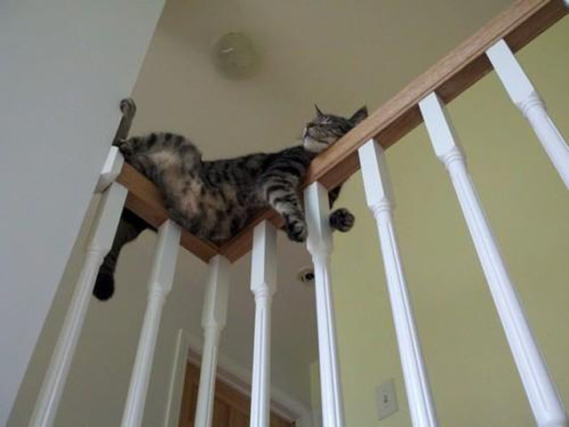Cat Asleep on Railing