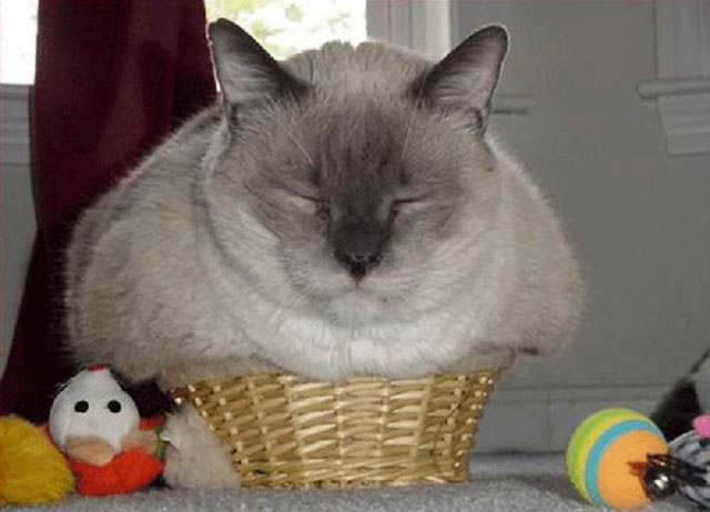 Cats Sleeping in Weird Places Tiny Basket