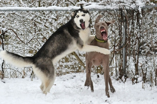 Dogs Playing With Funny Faces