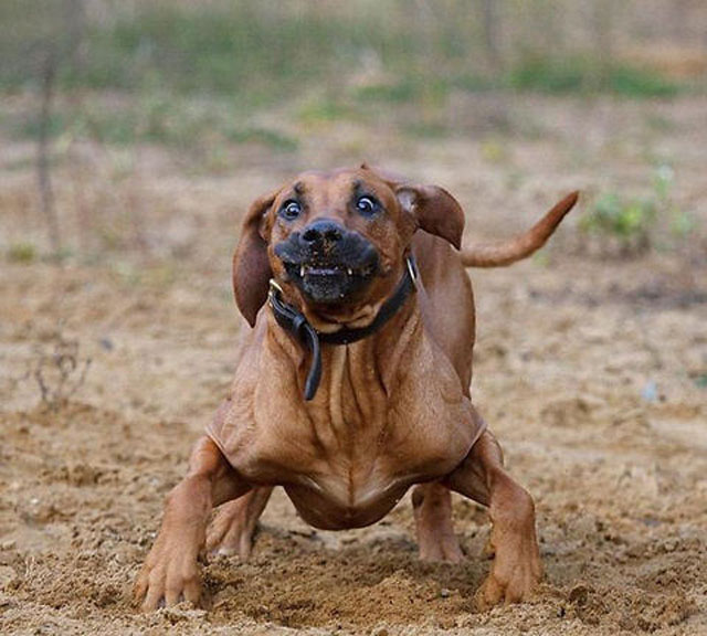 Hilarious Dog Faces Photo