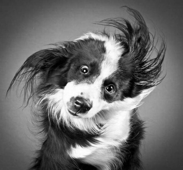 Funny Dog Faces Shaking Face
