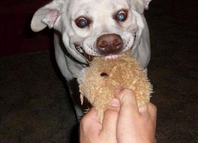 A Dogs Weird Face