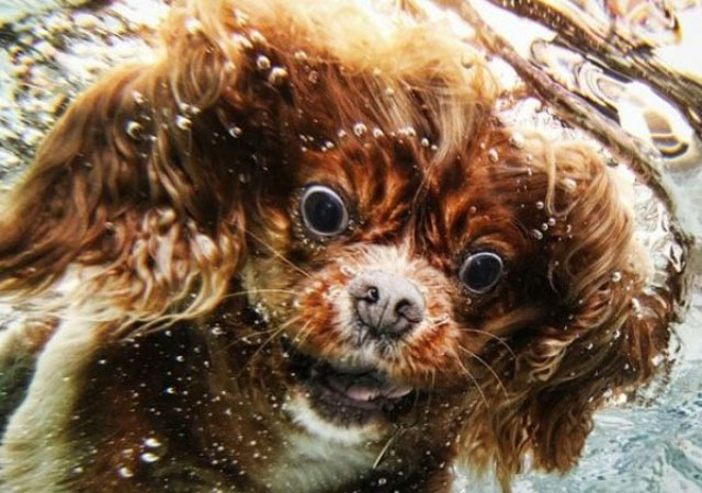 Dog Swimming Hilarious Face