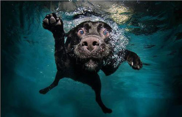 Funny Dog Faces Underwater