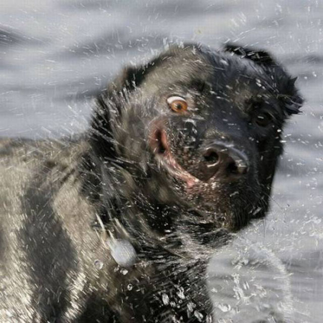 Funny Dog Shaking Off Water