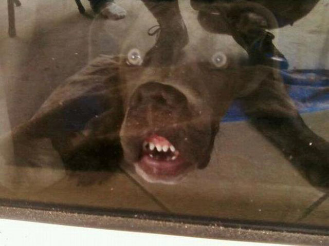 27 hilarious dog faces that will make you laugh hilarious dog faces voltagebd Image collections