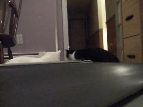 Cats Versus Treadmill