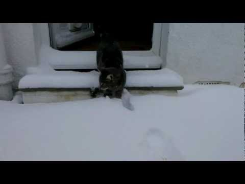 A Cat Experiences Snow For The First Time