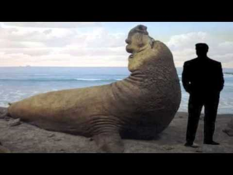 The 25 Largest Animals On Earth