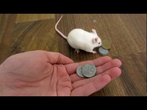 Smart Mouse Buys Itself A Treat