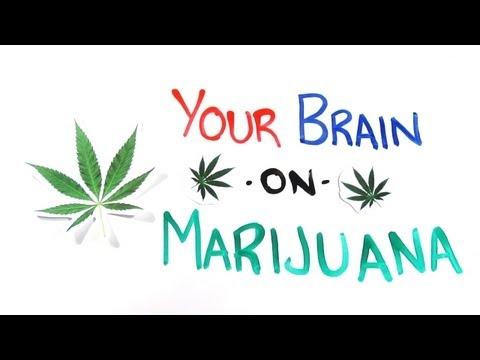What Happens To Your Mind On Marijuana