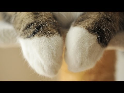 The Adorable Paws Of Maru