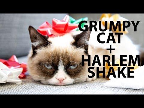 Grumpy Cat Does The Harlem Shake