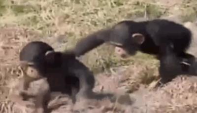 animals-being-jerks