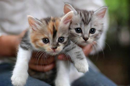 cutest-kitten-gifs
