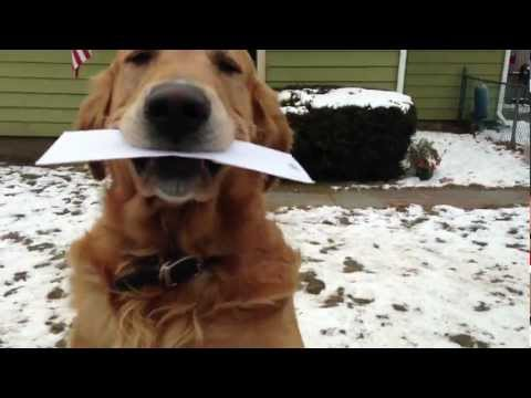 Dog Takes In The Mail