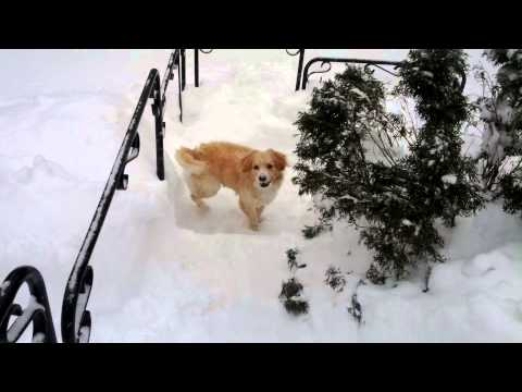 Too Much Snow For A Dog