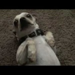 The 20 Cutest Dog Videos Ever