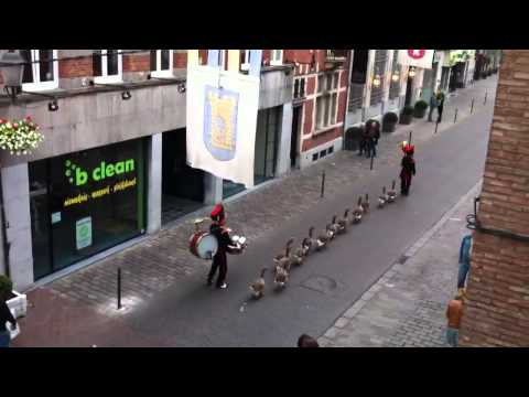 Geese Marching Band Precession