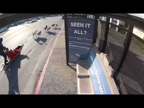 Video thumbnail for youtube video Best Bus Stop Ever – PBH2