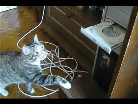 Video thumbnail for youtube video Cat Versus DVD Drive – PBH2