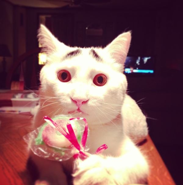 sam-cat-with-eyebrows-4
