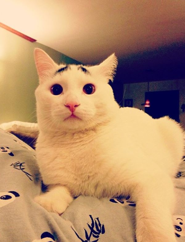 sam-cat-with-eyebrows-6