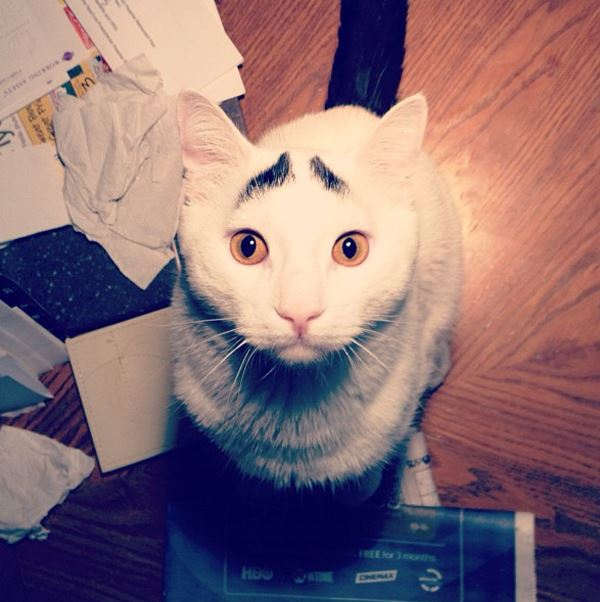 sam-cat-with-eyebrows-7