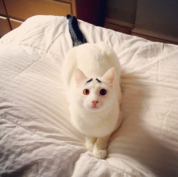 sam-cat-with-eyebrows-8