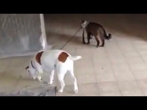 Video thumbnail for youtube video The 20 Cutest Dog Videos You Will Ever See
