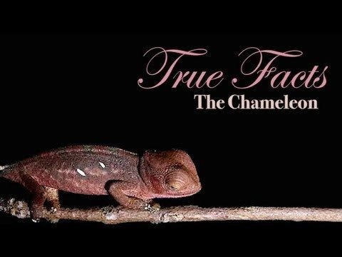 Video thumbnail for youtube video True Facts About The Chameleon – PBH2