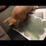 A Cat Reacts To An Optical Illusion