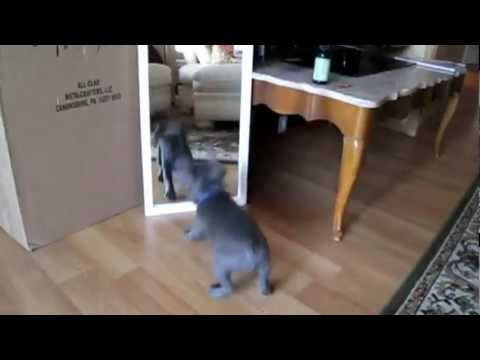 Kittens And Puppies Discover Mirrors
