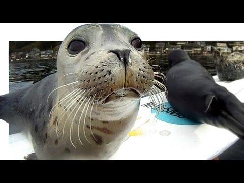 Baby Seals Board A Surf Board
