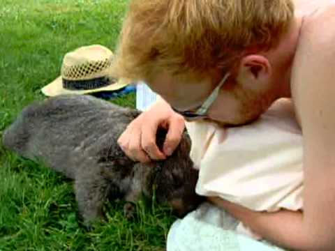 A Pet Wombat