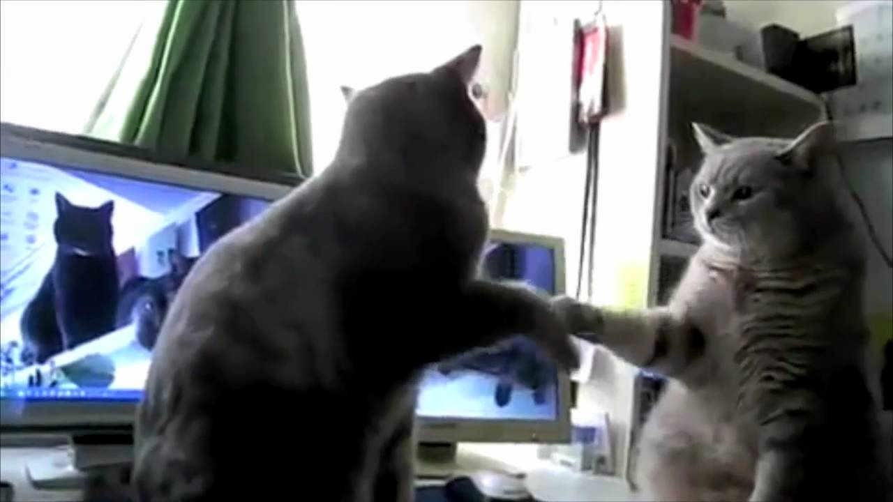 Cats Playing Patty Cake