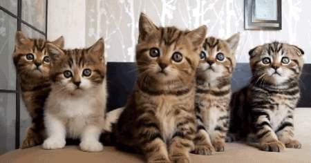 cutest-cat-gifs